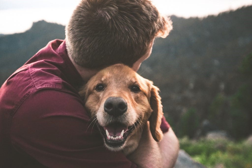 The 10 Most Loyal Dog Breeds You Should Adopt