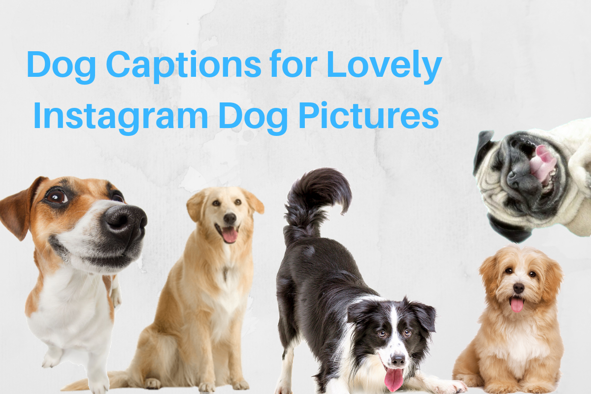 12 Dog Captions for Lovely Instagram Dog Pictures