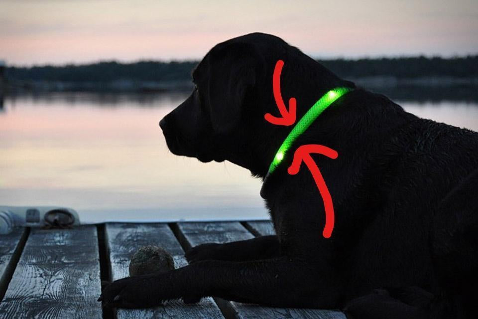 5 Benefits of LED Light Dog Collar