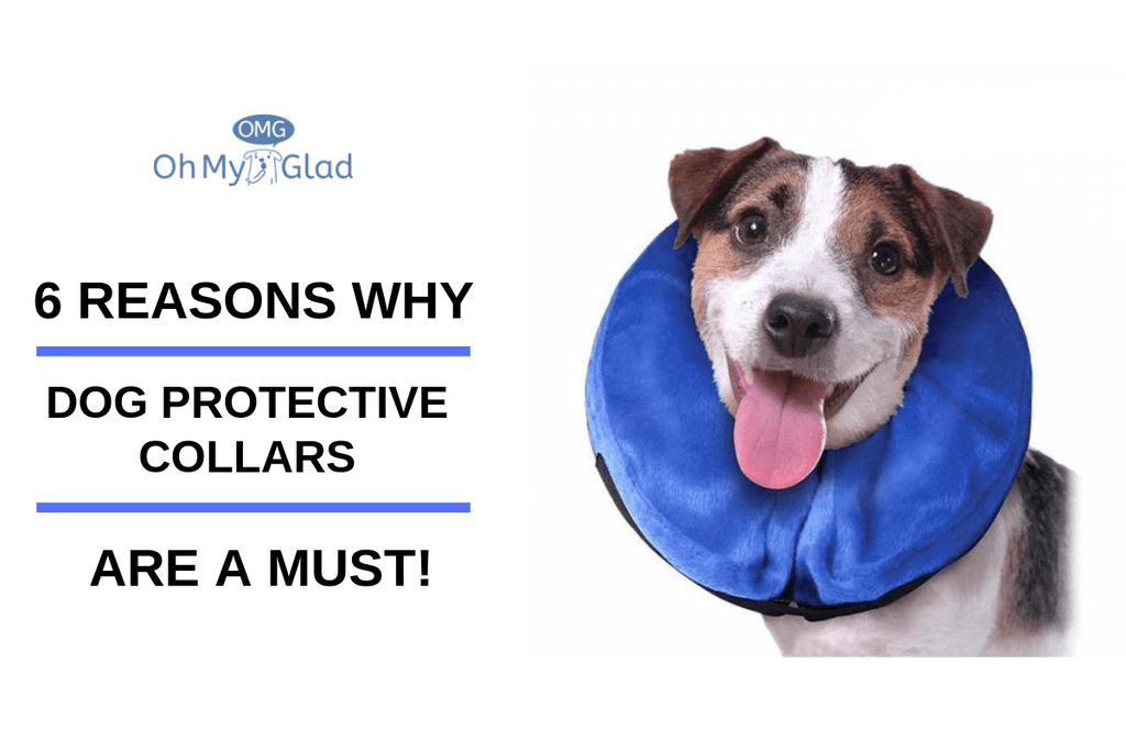 6 Reasons Why Dog Protective Collars Are A Must!