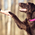 10 Fun Ways to Mentally Stimulate Dogs