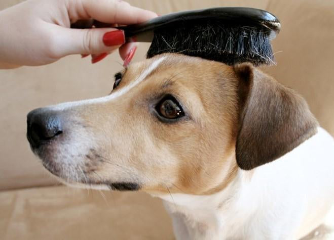 8 Key Benefits of Professional Dog Grooming Combs