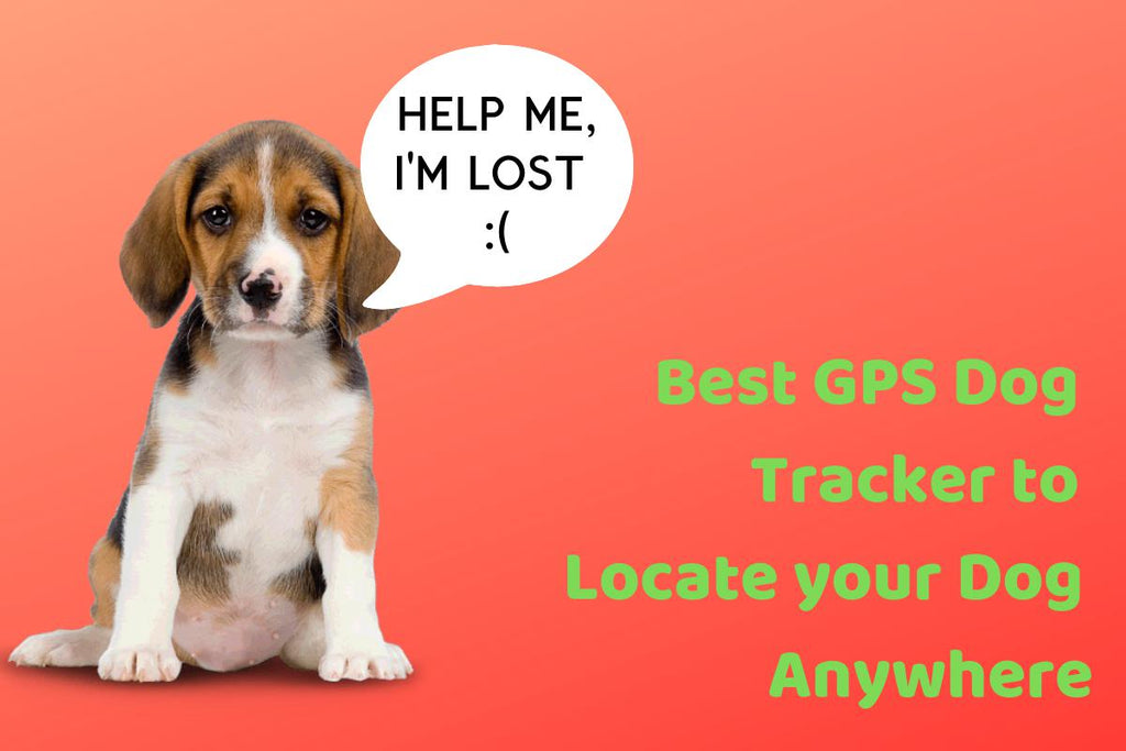 Best GPS Dog Tracker to Locate your Dog Anywhere