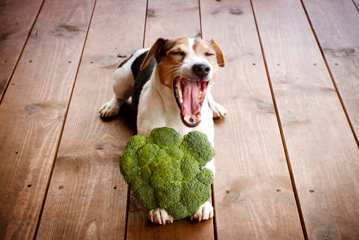 The Best Vegetables For Dogs You Can Find !