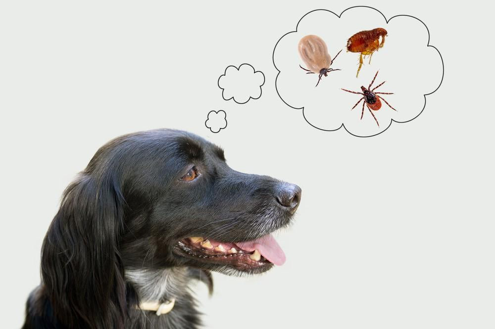 Best Flea and Tick Prevention For Dogs That Works of 2019