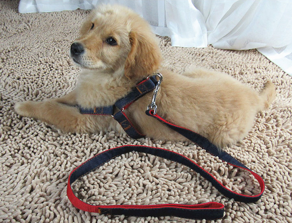 Best Harness for Small Dogs that Escape