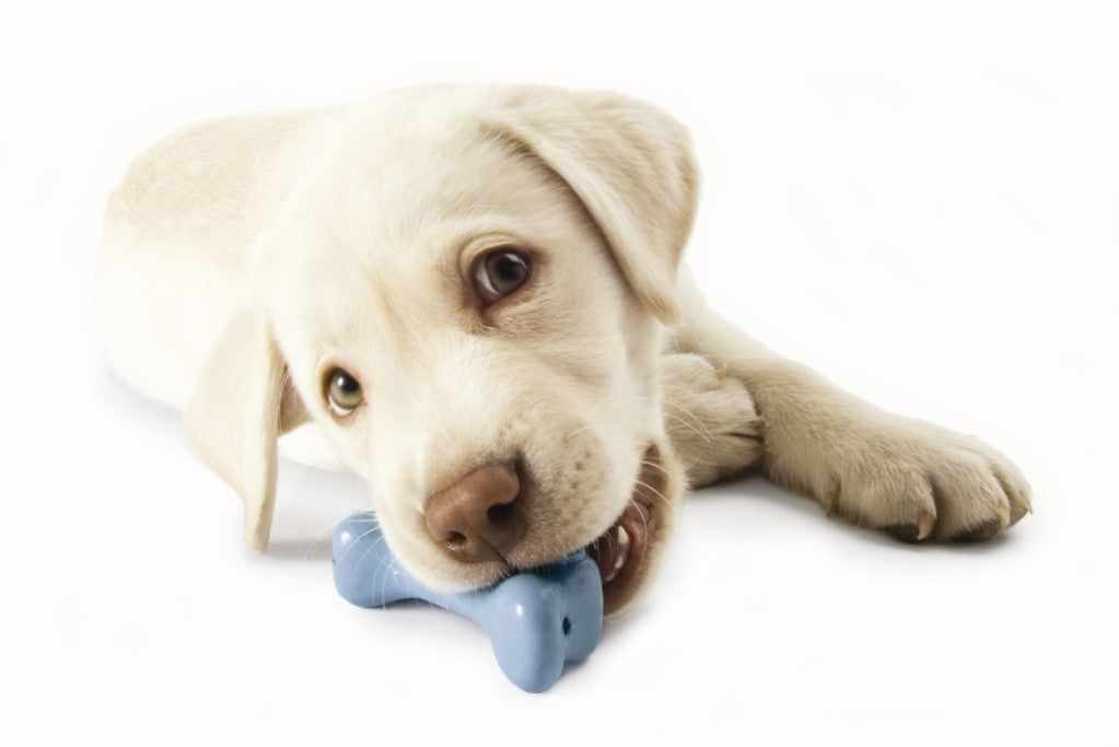 The 5 Best Dog Toys for Aggressive Chewers
