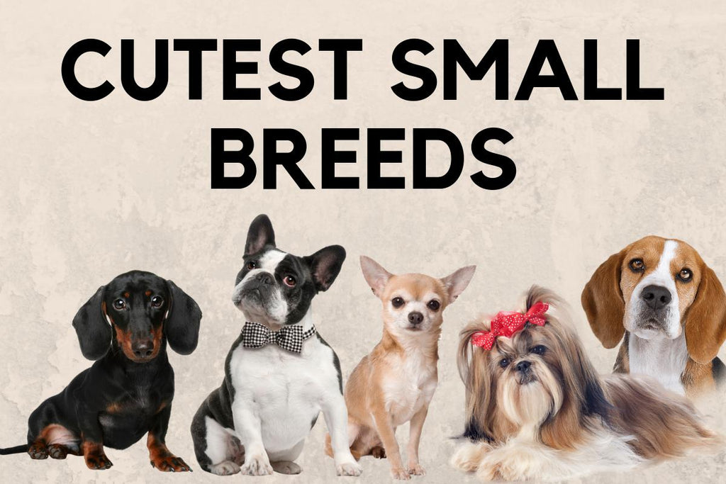 The Top 10 Small Dog Breeds with Pictures to Adopt Today