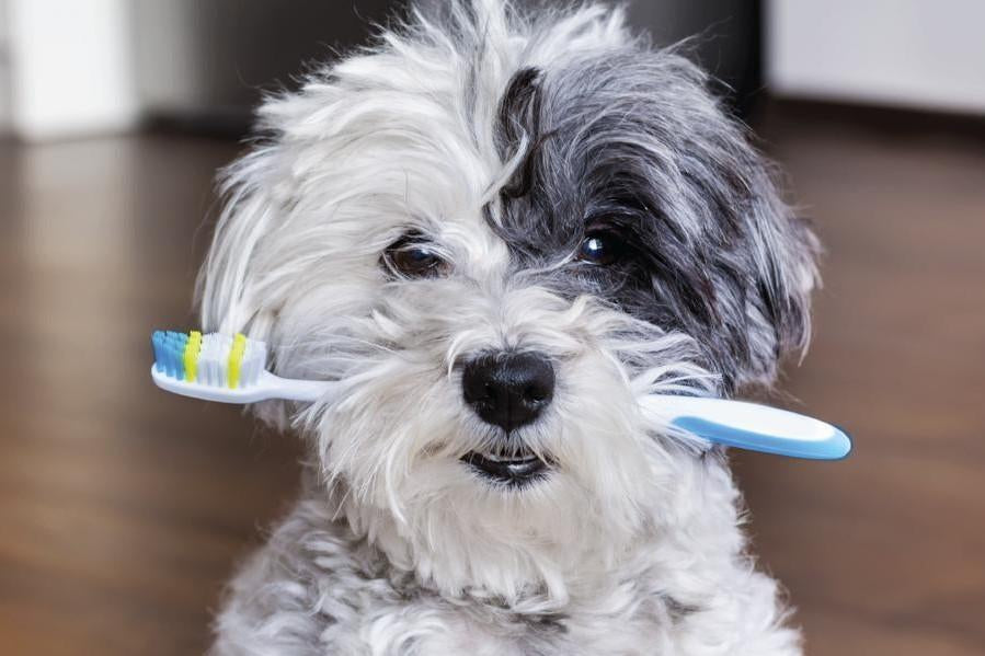 Do You Really Know How To Brush Dog's Teeth At Home?