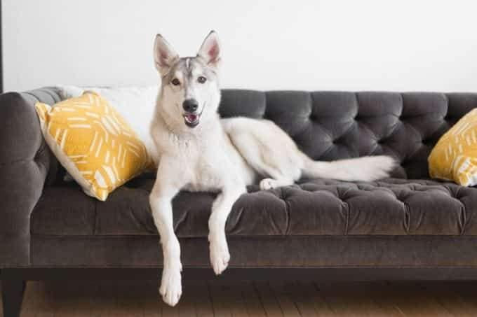 How to Remove Dog Hair from Furniture and Clothes