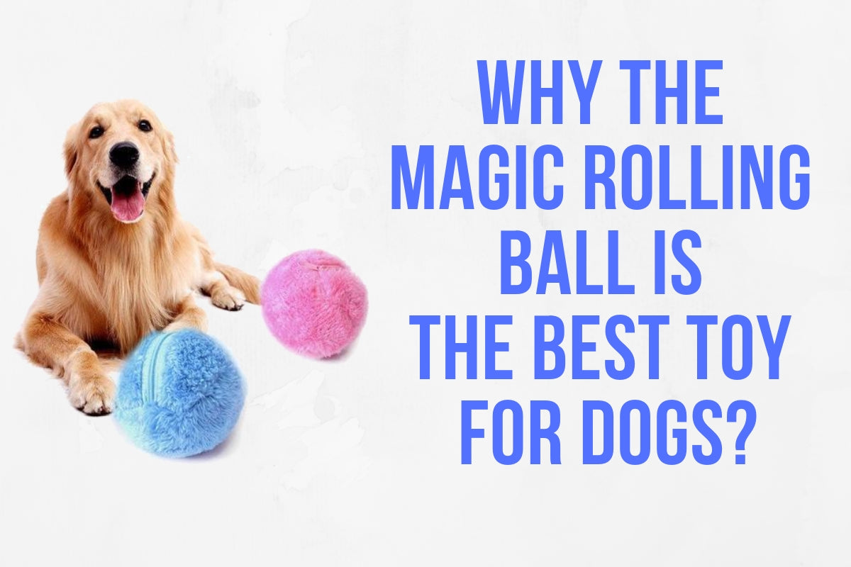 Why the Magic Rolling Ball For Dogs is The Best Toy?