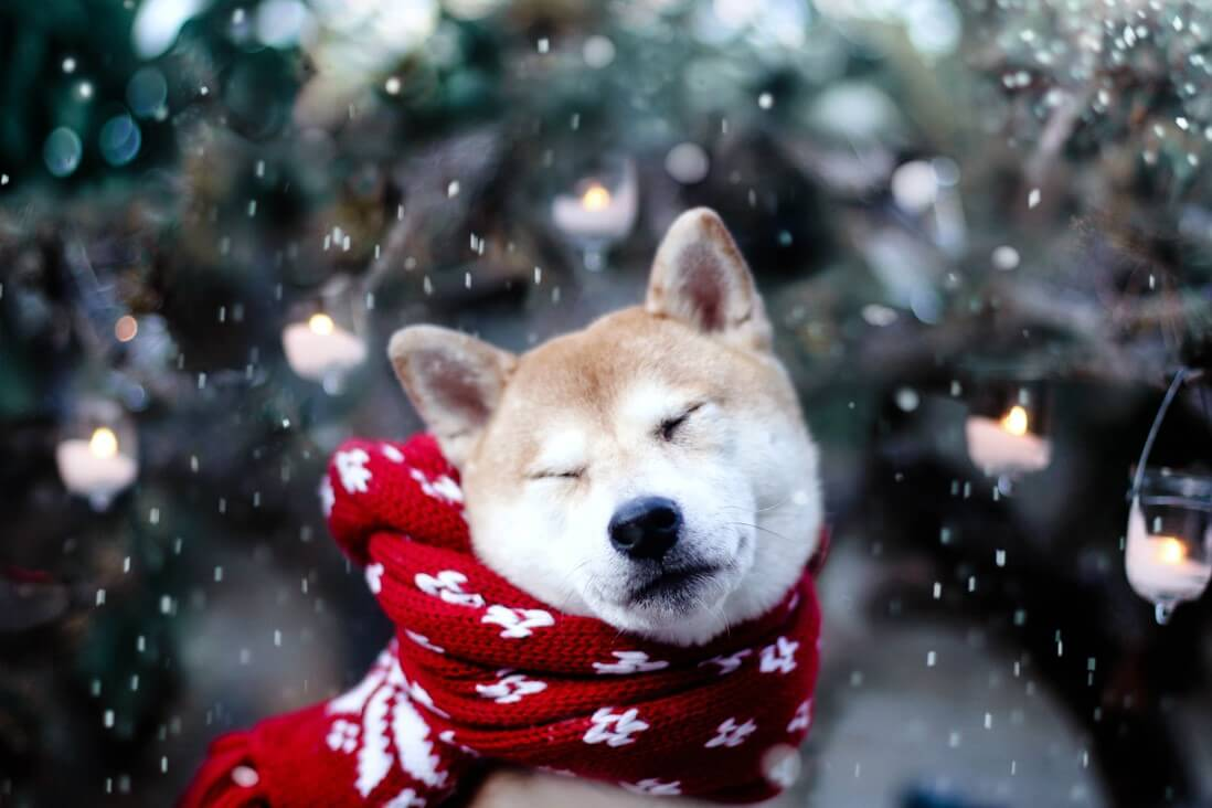 Why Is Preparing Your Dog for Winter Is A MUST!