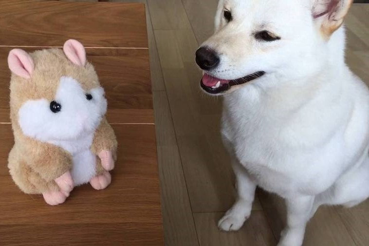 Forget Other Toys, Try This Talking Hamster for Dogs