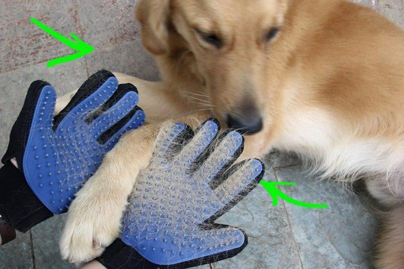 The Truth About Grooming Gloves For Dogs