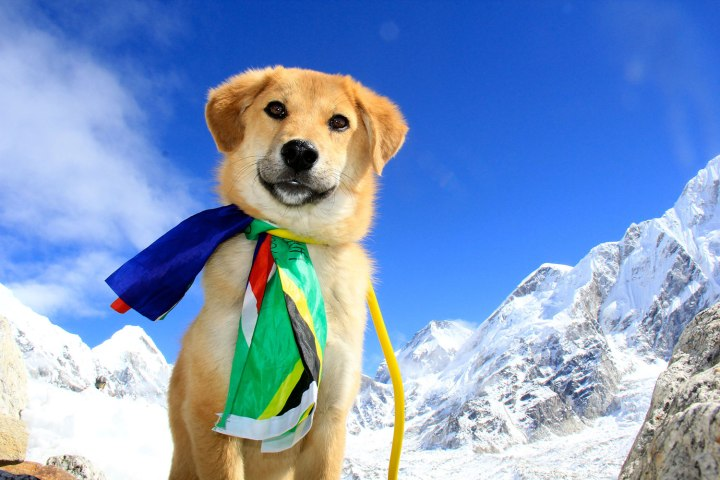 everest dog name