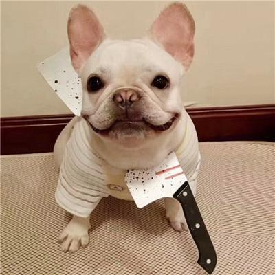 Funny Dog Accessories For Halloween - Ohmyglad
