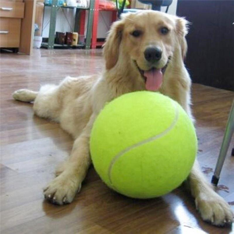 Giant Tennis Ball Dog Toy Dog Toys Oh My Glad