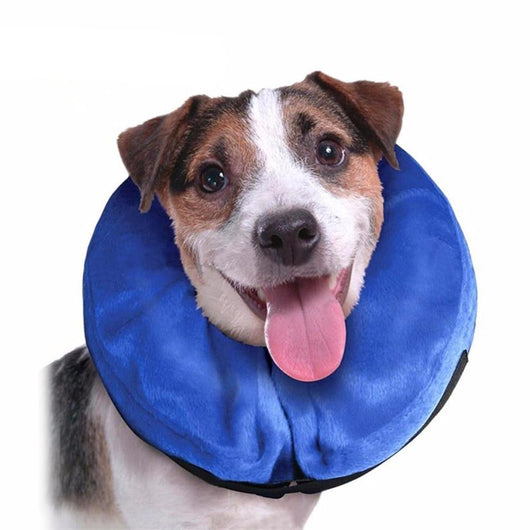 Inflatable Dog Cone - Ohmyglad