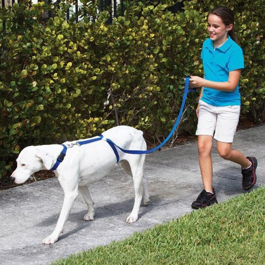 Instant Dog Trainer Leash - Ohmyglad
