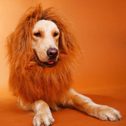Lion Mane For Dogs - Ohmyglad