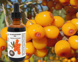 100% Pure Sea Buckthorn Fruit, Berry Oil. Cold, Essential oil - Meditation Essentials