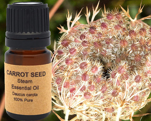 Carrot Seed Essential Oil 5 ml, 10 ml or 15 ml, Essential Oil - Meditation Essentials