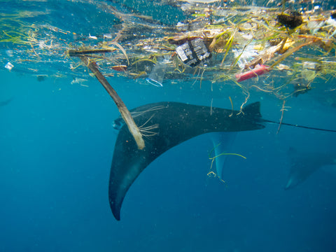 Microplastics in our ocean