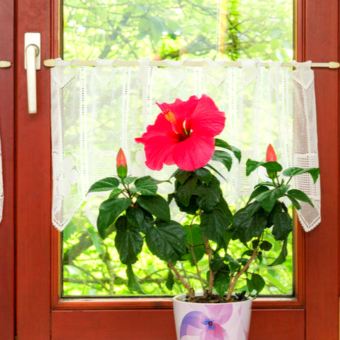Artificial Hibiscus Plant