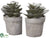 Echeveria Bookend - Green Gray - Pack of 2