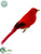 Summer Tanager - Red - Pack of 12