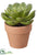 Succulent - Green Two Tone - Pack of 4