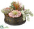 Succulent Garden - Green Rust - Pack of 4
