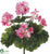 Outdoor Geranium Bush - Pink - Pack of 12