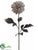 Zebra Print Dahlia Spray - Cream Black - Pack of 12