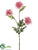 Aster Mum Spray - Pink - Pack of 12