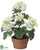 Geranium - White - Pack of 4