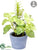 Silk Plants Direct Basil, Rosemary - Green - Pack of 12