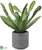 Cactus - Green - Pack of 4