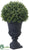 Rosemary Ball Topiary - Green - Pack of 6