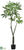 Pachira Aquatica Tree - Green - Pack of 2