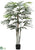 Raphis Palm Tree - Green - Pack of 4