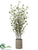 Cornus Tree - Green - Pack of 1