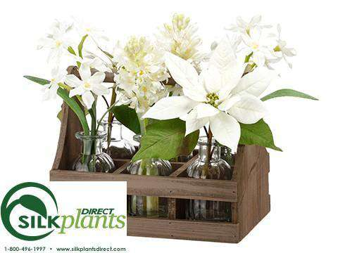 Poinsettia Paperwhite Hyacinth White Pack Of 2 Chw