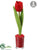 Tulip - Red - Pack of 12