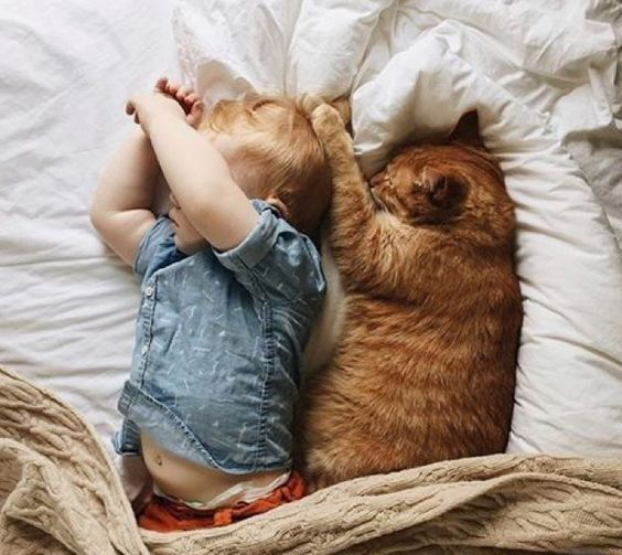 10 Cute Reasons proving why every family needs a cat
