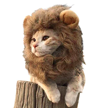 Lion Cat Costume - Kawaii Kitty, The cutest Cat themed Gifts for cat lovers