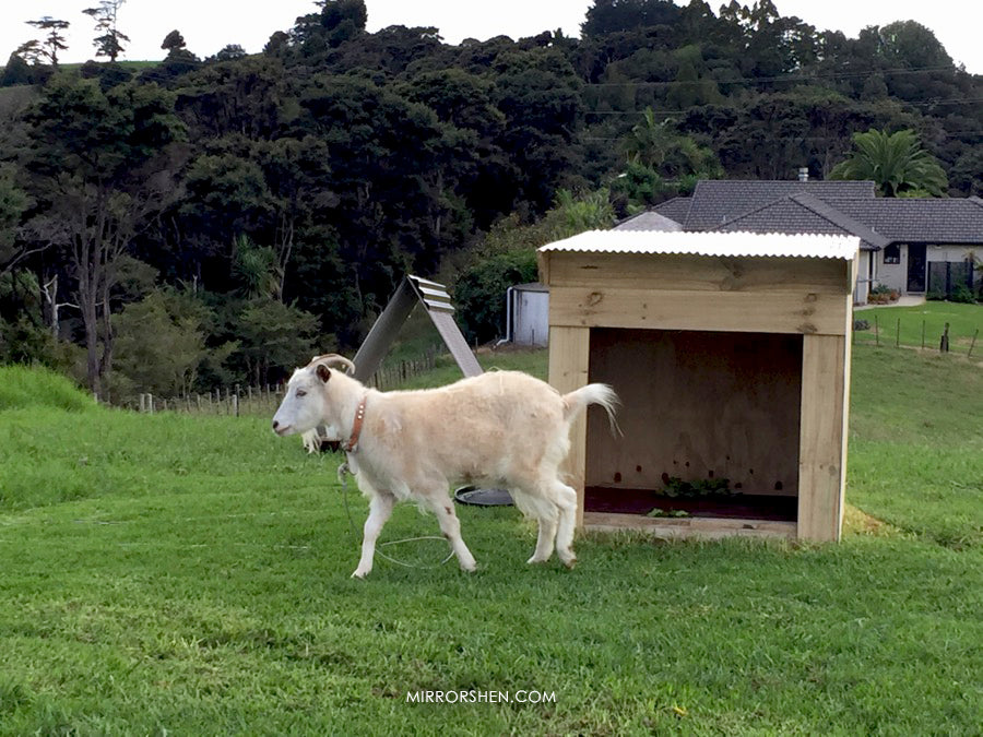 Building Goat House