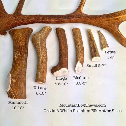 Mountain Dog Chews Mountain Dog Chews - Whole Elk Antlers Dog Chews - Naturally Shed - A+ Grade