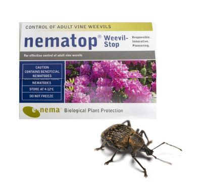 Nematop Vine Weevil Trap-ladybirdplantcare.co.uk