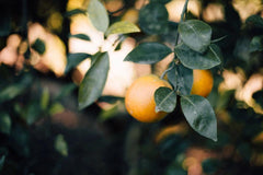 Citrus fertiliser (Winter)